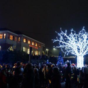 Bournemouth's brand new Christmas Tree Wonderland is finally here!