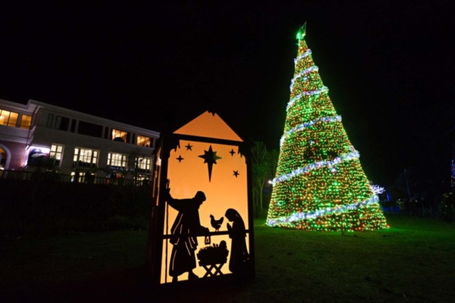 The Bethlehem Tree near in the Bournemouth Gardens