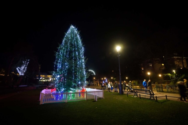 Norway Tree all lit up in Bournemouth gardens