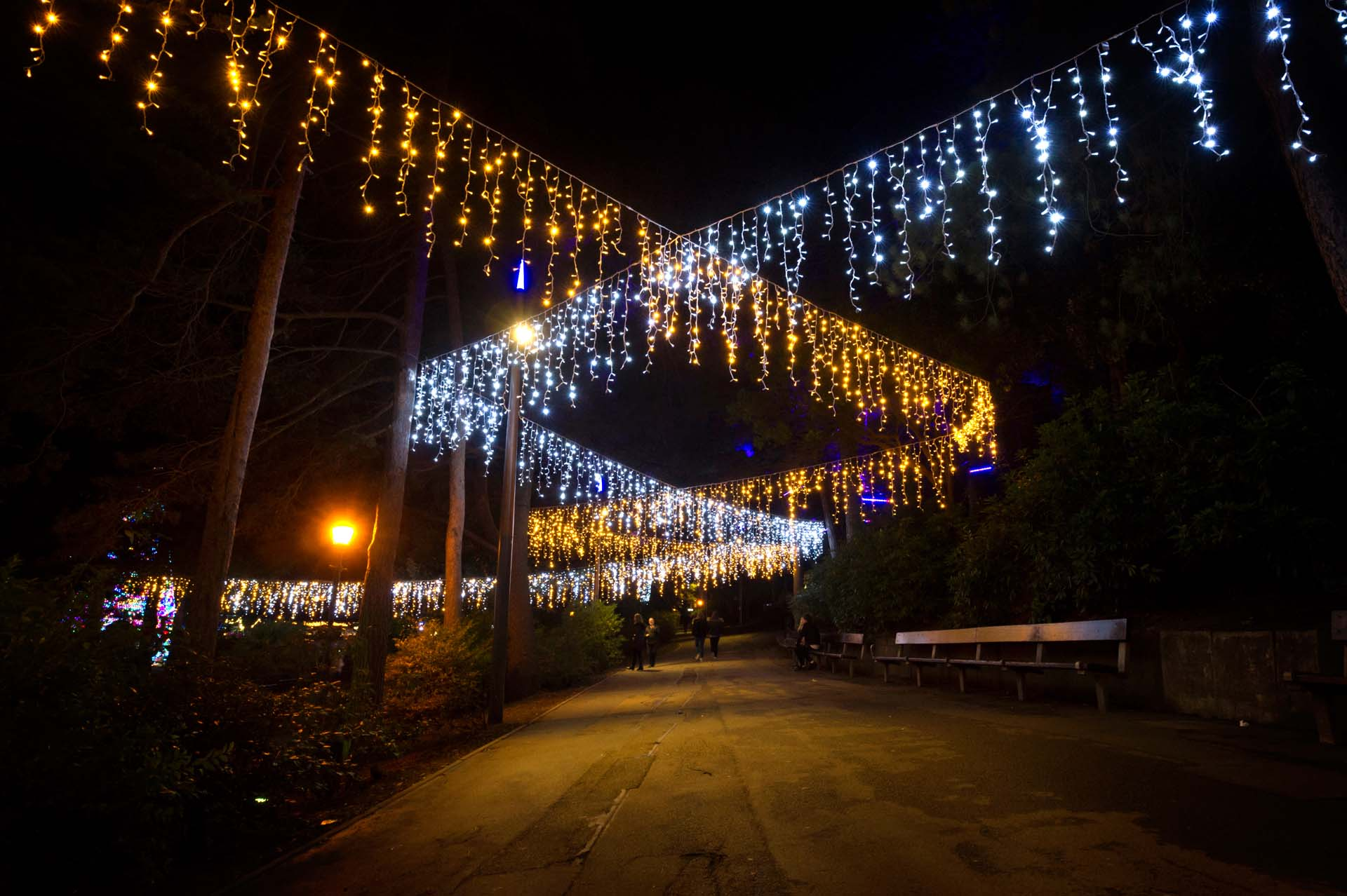 The Pinewalk lights at night